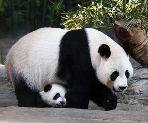 animal, son, and china image