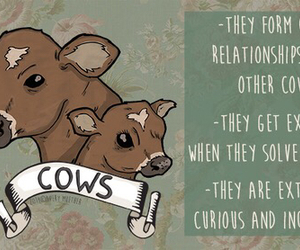 animal, cow, and feel image