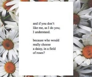 rose and daisy image