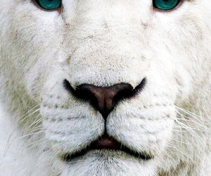 animals, cool, and white image