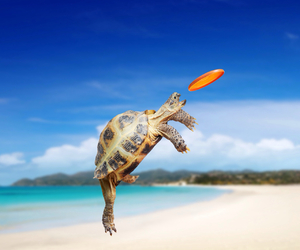 turtle, beach, and funny image