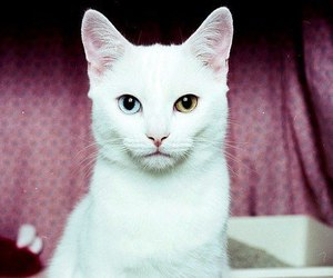 cat, white, and animal image
