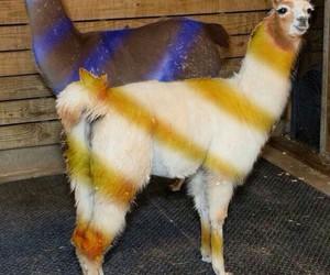 black and blue, llamas, and dress image
