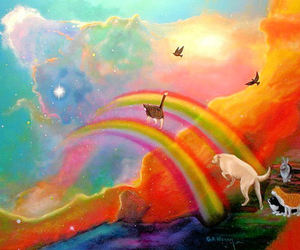 animals, cats, and rainbow image