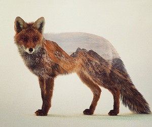 art, fox, and nature image
