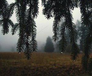 background, forest, and rain image