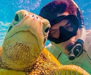 animal, selfie, and turtle image