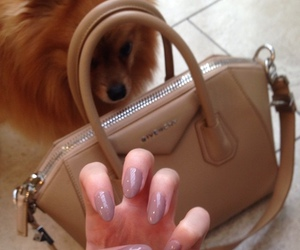 animals, bags, and nails image