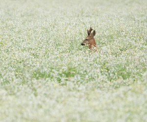 flowers, deer, and nature image