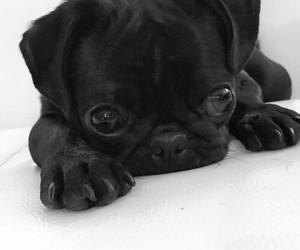 help me i'm of cuteness image
