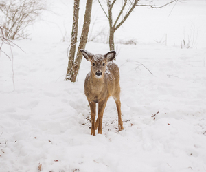 deer, white, and snow image