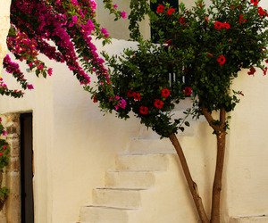 flowers, house, and mediterranean image