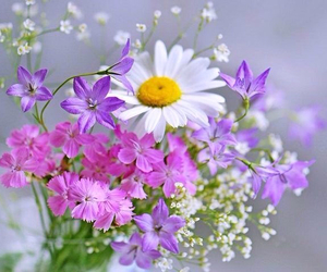 colour, daisy, and flowers image