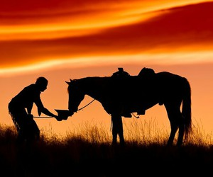 horse, sun, and photography image