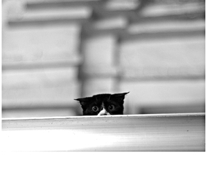 cat, alone, and black image