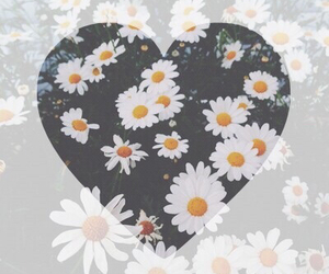 flowers, heart, and white image