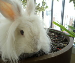 animal, lop, and plant image
