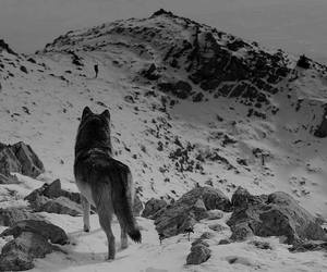 wolf, mountains, and animal image