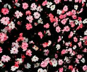 floral, pretty, and wallpaper image