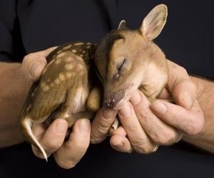 aww, deer, and baby image