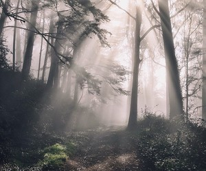 alternative, beauty, and forest image