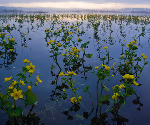 flowers, landscapes, and nature image