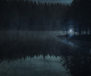 forest, night, and dark image