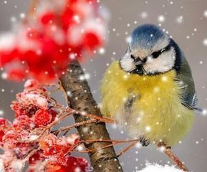 bird, winter, and nature image