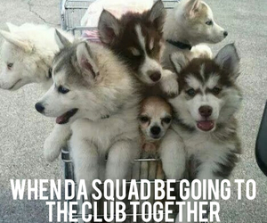 club, funny, and puppies image