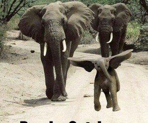 elephant, funny, and cute image