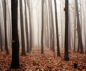 art, autumn, and forrest image