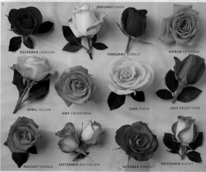 black and white, months, and roses image