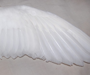 wing, white, and angel image