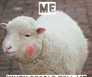 quote and sheep image