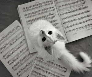 cat, music, and white image