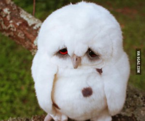 owl, quotes, and sad image