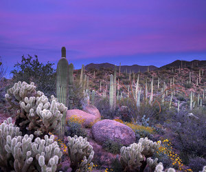 cactus, purple, and nature image