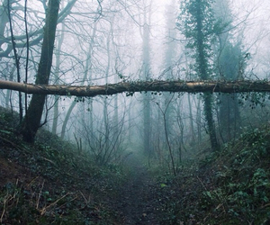 forest, grunge, and pale image