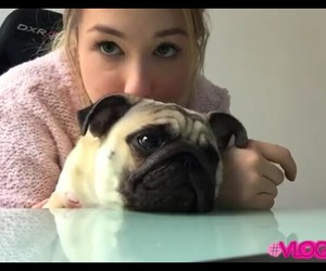 blonde, mignon, and pug image