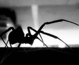 black and white and spider image