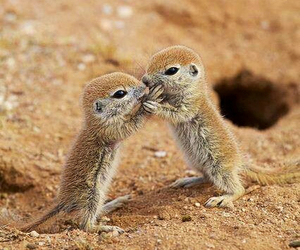 cute, animal, and kiss image