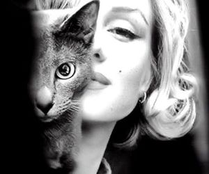 cat, Marilyn Monroe, and black and white image