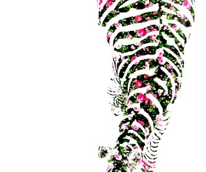 zebra and floral image