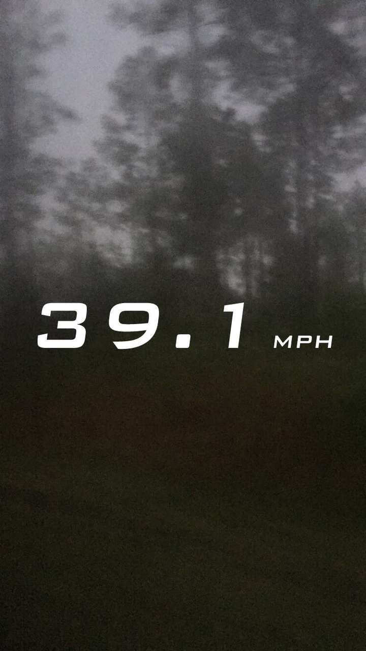 grunge, trees, and speed image