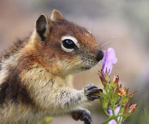 squirrel and flowers image