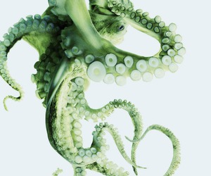 octopus, green, and animal image