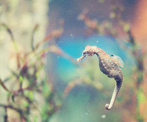blue, ocean, and seahorse image