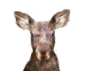 moose, nature, and baby moose image