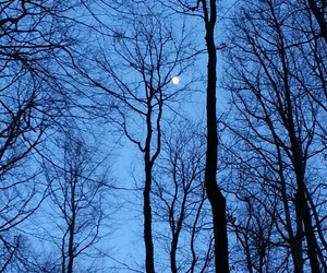 alone, moon, and tree image