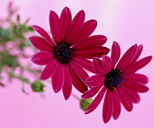 flower, nice, and pink image